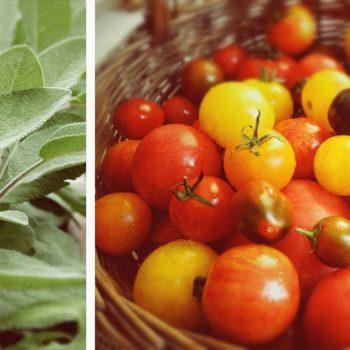 tomate salbei 350x350 - Auberginen Zucchini Pasta mit Schafskäse