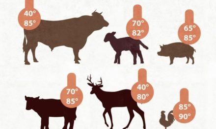 Kerntemperatur bei Fleisch (Tabelle)