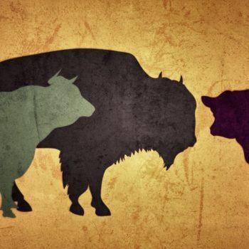 bison rind neu 350x350 - Ein Rind wird geschlachtet