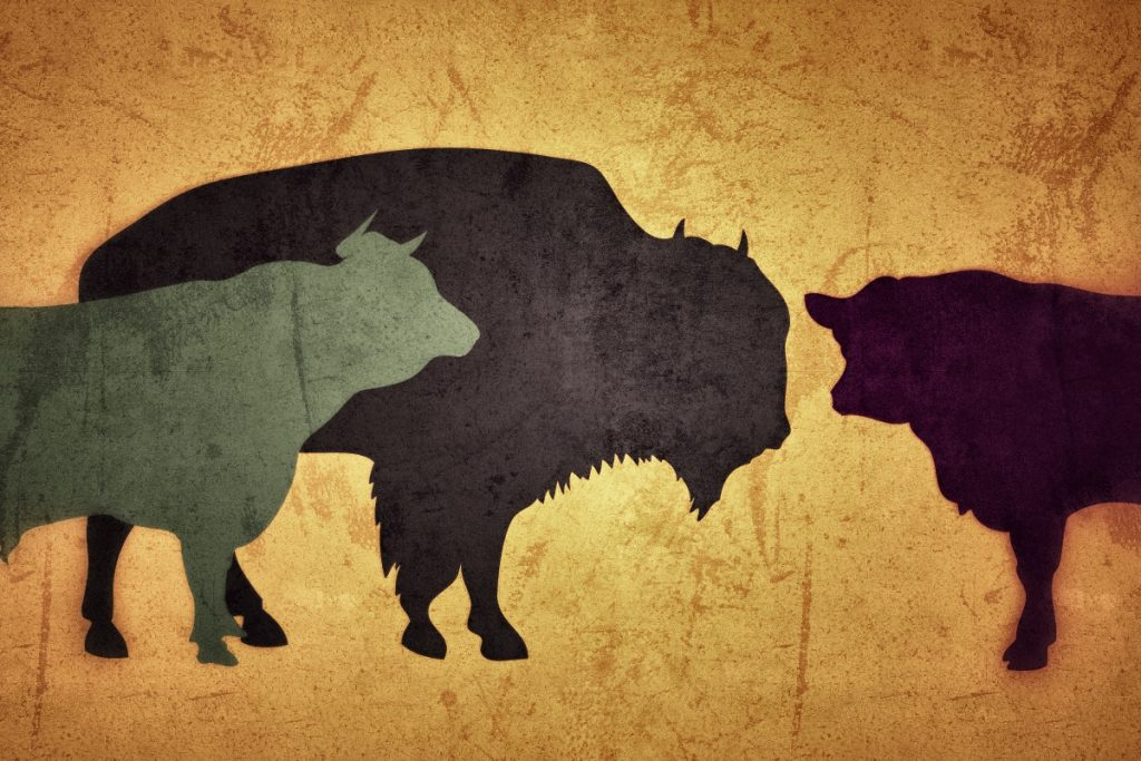 bison rind neu