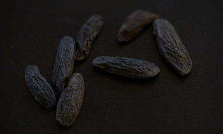 Sellerieschaumsuppe mit Tonkabohne