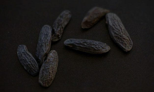 Selleriesuppe mit Tonkabohne