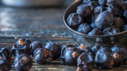 wachholder 480x270 - Gin deine Botanicals – Je mehr desto besser?