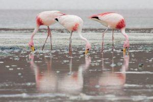 2880px James Flamingos MC 300x200 - Pink Flamingo Floyd  – trendiger Gin Cocktail, nicht nur für Mädchen