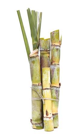 zuckerrohr - Warum jeder einmal im Leben Rhum agricole probiert haben sollte