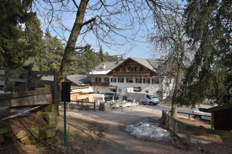 nachwuchs 16 802x534 - Saltner Edelweiss in Jenesien