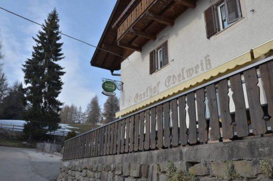 nachwuchs 19 534x355 - Saltner Edelweiss in Jenesien