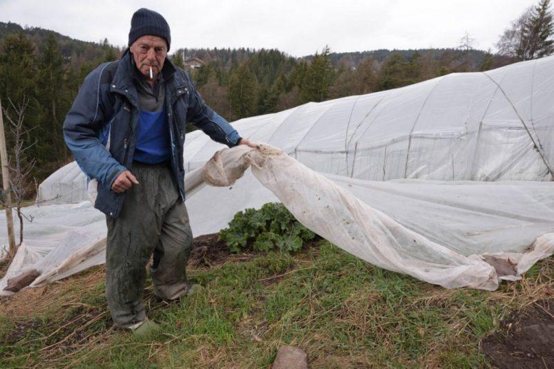 salten edelweiss 44 802x534 - Saltner Edelweiss in Jenesien