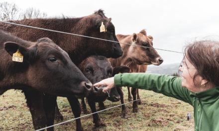 Die Doktorin und das liebe Wagyu-Vieh