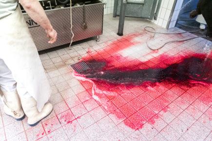 190911 wagyu schlachtung 2076 435x290 - Ein Rind wird geschlachtet