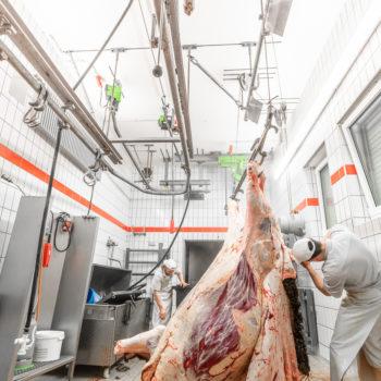 200129 Wagyu Schlachtung 5737 1 350x350 - Die Doktorin und das liebe Wagyu-Vieh