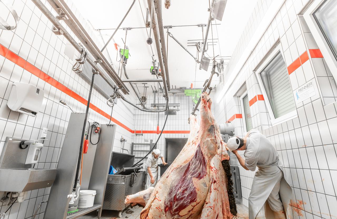 200129 Wagyu Schlachtung 5737 1 - Ein Rind wird geschlachtet