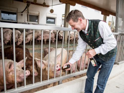 Vulcano Schinken aus der südöstlichen Steiermark - Artgerechte Schweinehaltung